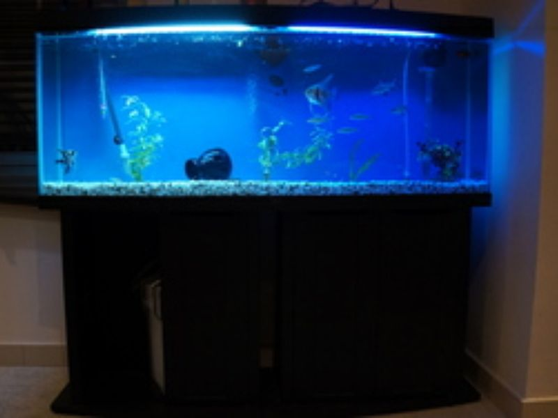 Big fish tank for sale images for Large fish tanks for sale